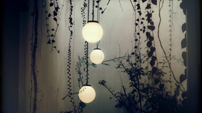 Geef je planten het juiste licht